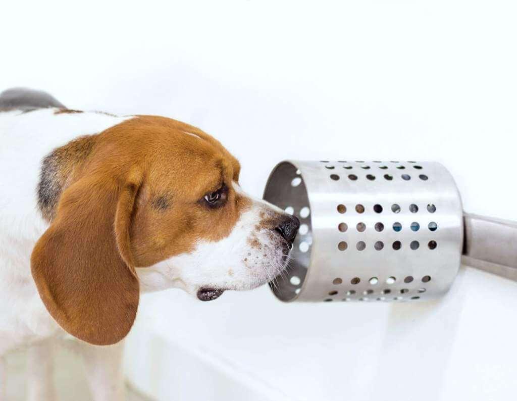 dogsmellstudy - Cães podem farejar câncer no sangue com precisão de quase 97%, mostra estudo