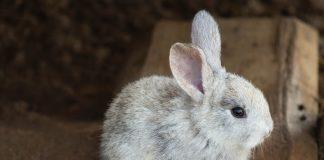rabbit 3578422 960 720 324x160 - Início