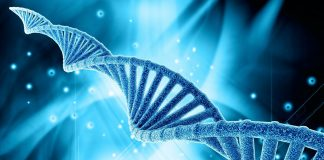 DNA 1 324x160 - Início