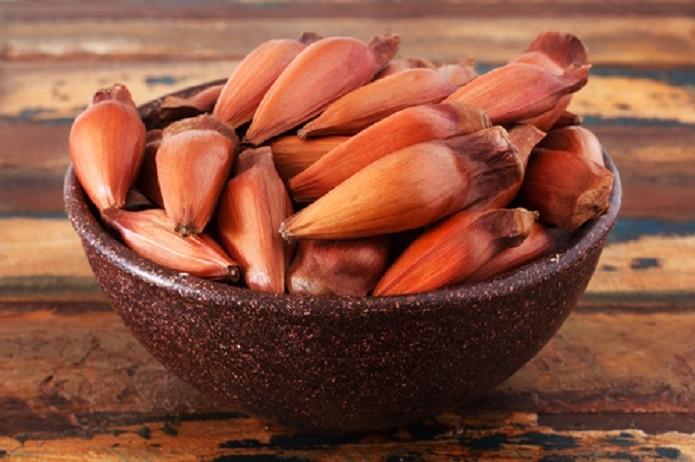 foto pinhao - As 10 sementes mais saudáveis para comer e seus benefícios