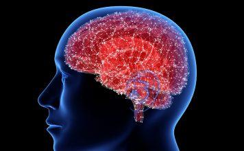 brain cell mapping 356x220 - Início