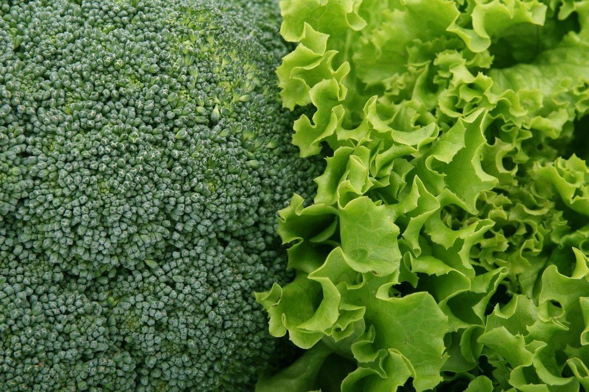 broccoli 1239430 1280 scaled - Nova pesquisa descobriu que vegetais de folhas verdes são essenciais para a força muscular