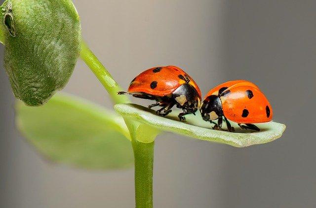 ladybugs 1593406 640 - Um homem descobre que tem uma joaninha vivendo em seu intestino após uma colonoscopia